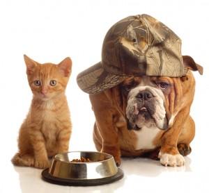 Sur mesure service animaux compagnie Anim'Happy