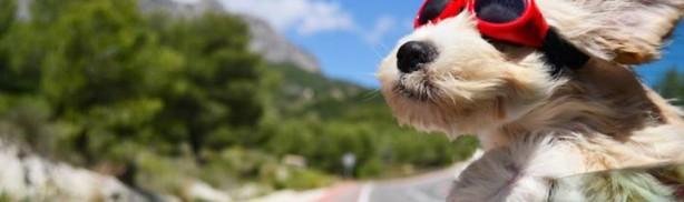 Taxi animalier Anim'Happy