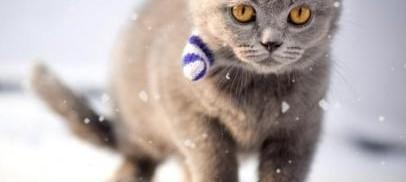 Le chat dans la neige