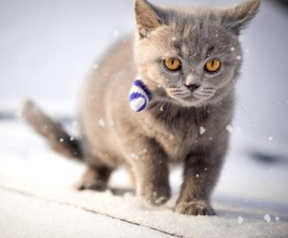 Le chat et le froid comment le prot ger anim 39 happy - Proteger canape griffes chat ...