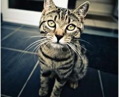 les résolutions de votre chat