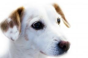 dog-72333_1280